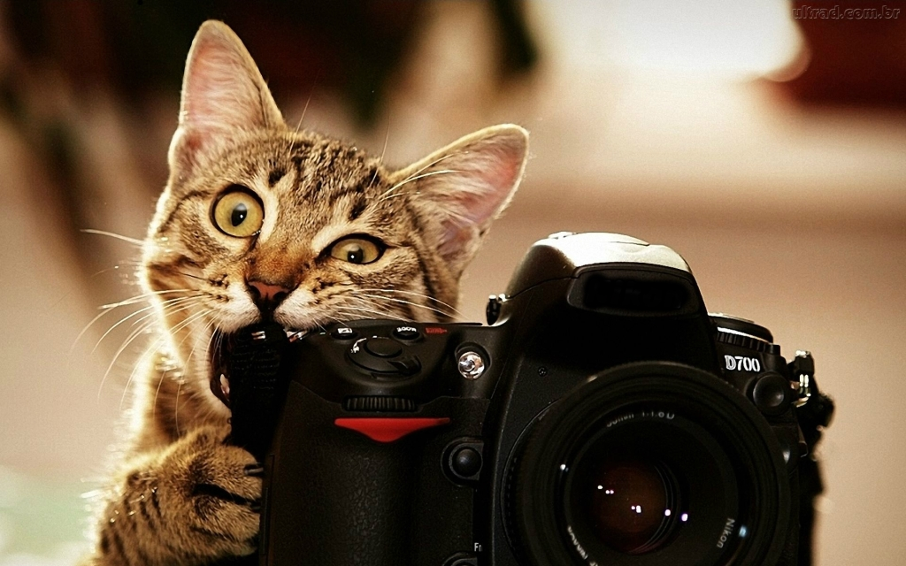 275526_papel-de-parede-gato-fotografo_1920x1200